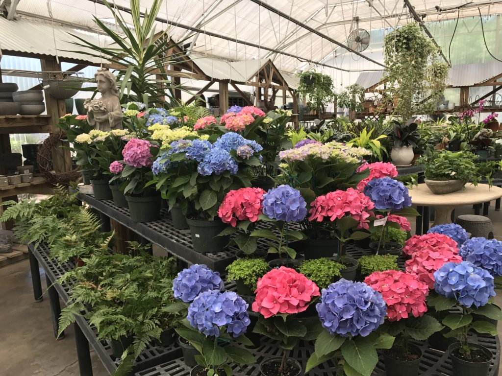 Annuals Perennials Available At Brooks Collier