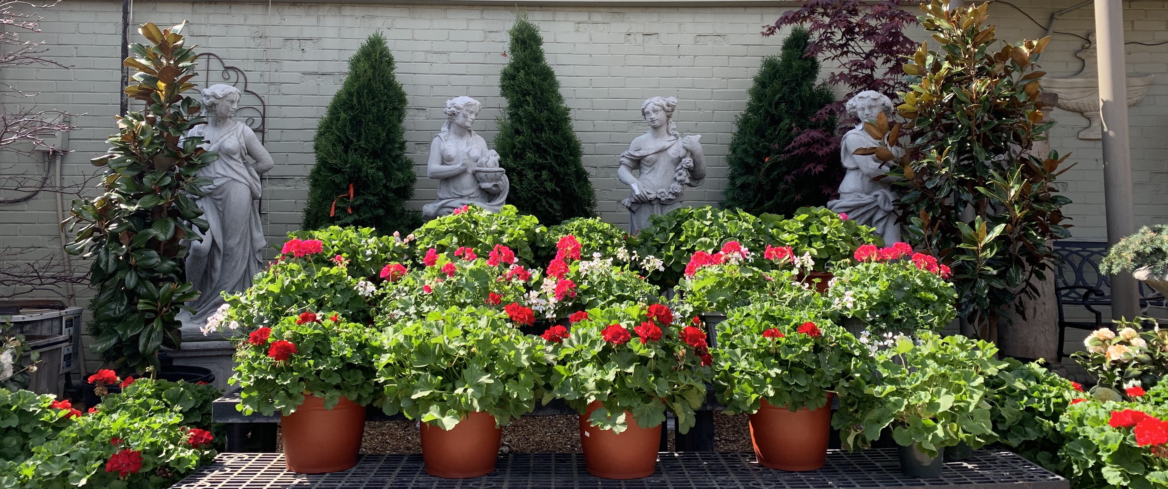 Brooks & Collier, Plants, Annuals, Statues