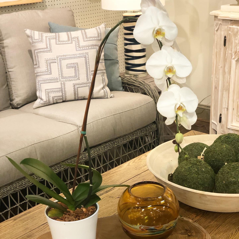 Brooks & Collier, plants, indoor plants